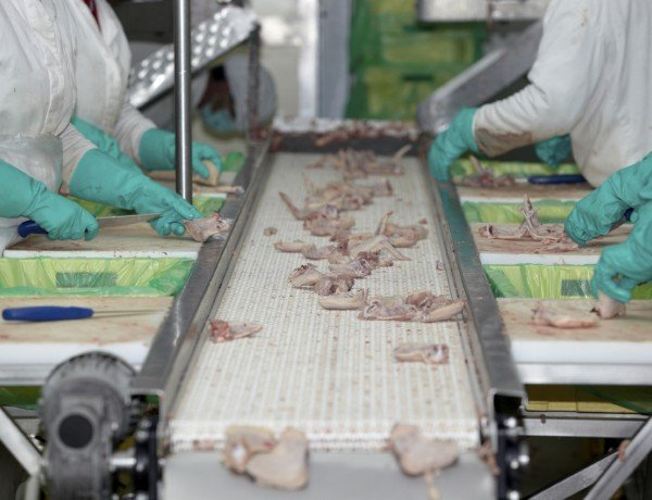 processing poultry in a factory