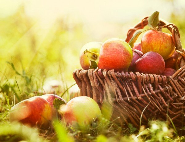 apples are a healthy autumn treat