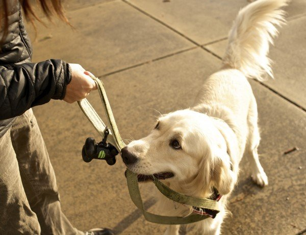 the dog still needs to walked when you're too tired from chemo